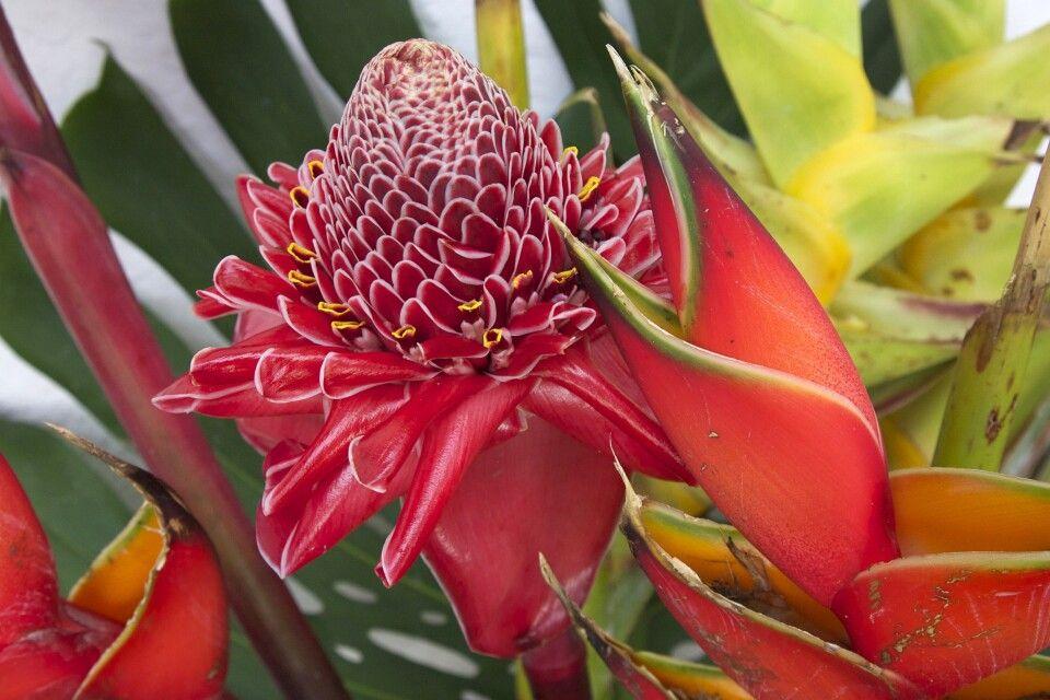 Tropische Blütenpracht
