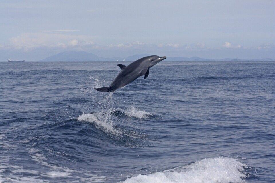 Delphinsprung