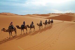 Die Wüstenkarawane