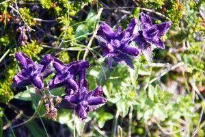 Filigrane Flora