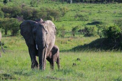Elefantenkuh mit ihrem Jungen