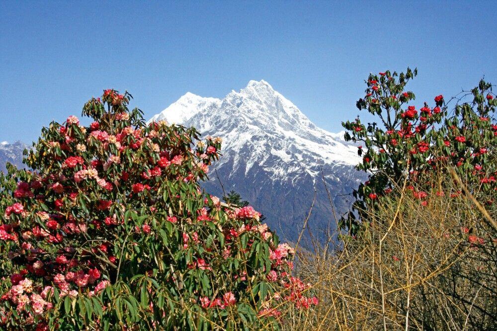 Auch der Frühling mit der prächtigen Rhododendronblüte bietet sich für Trekkingtouren und Expeditionen in Nepal an.