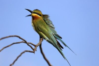 Vogelwelt im Yala NP