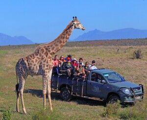 Garden Route Game Lodge, Safari