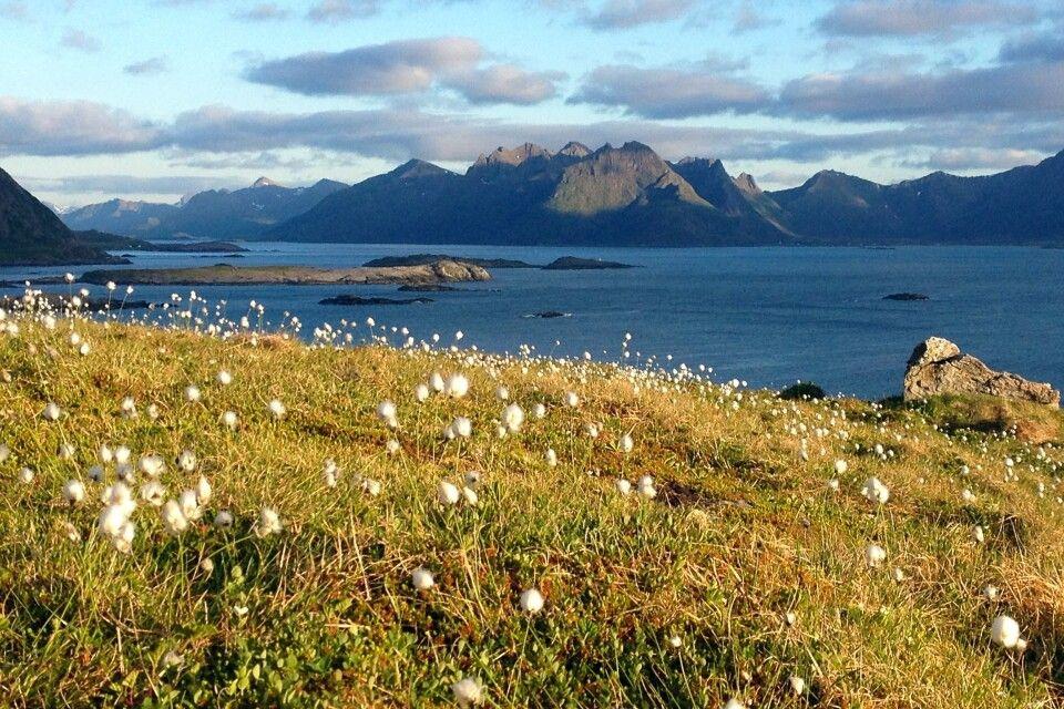Blick von Nyksund auf die Insel Skogsoy