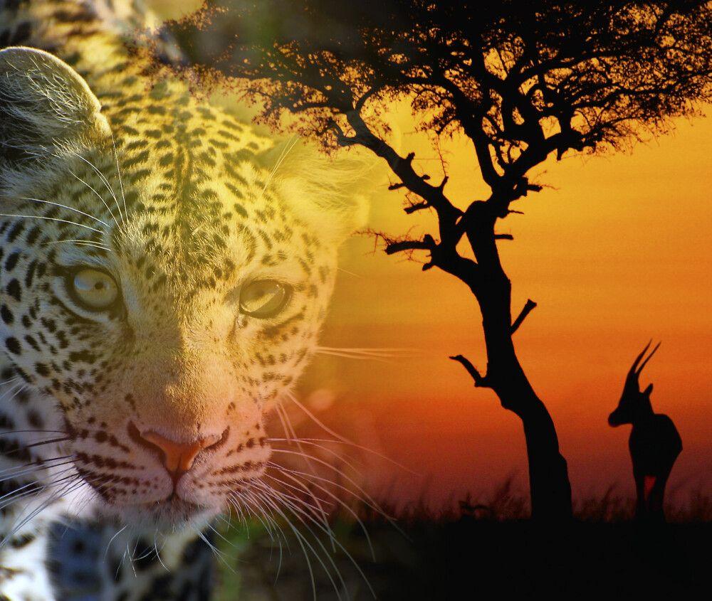 Ein Traum von Afrika...