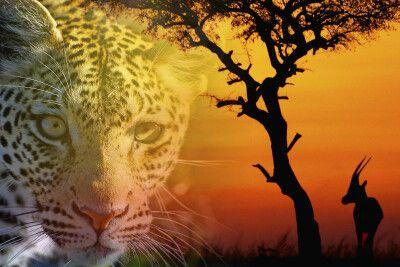 Ein Traum von Afrika…