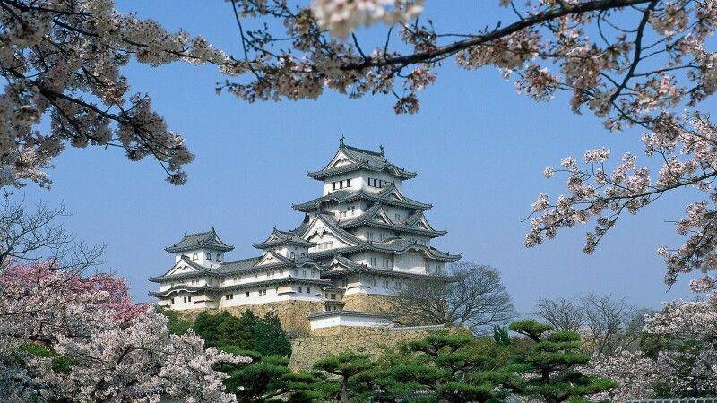 Burg Shirasagi-jo in Himeji zur Kirschblüte © Diamir
