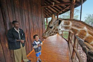 Besuch auf der Giraffenfarm bei Nairobi