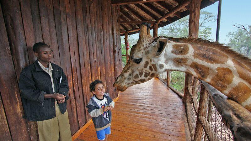 Besuch auf der Giraffenfarm bei Nairobi © Diamir
