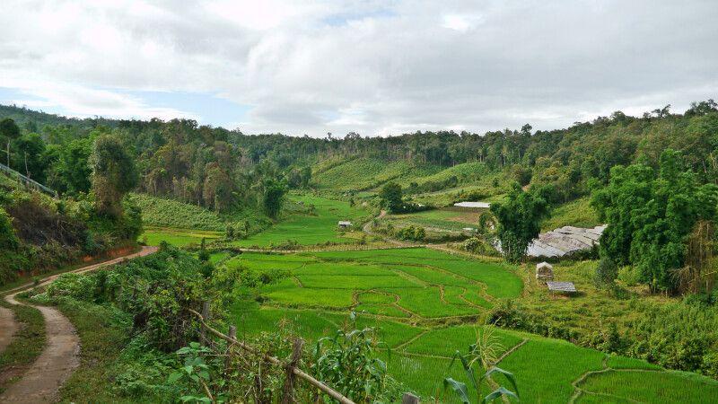 Trek entlang der Reisfelder in Nordthailand © Diamir