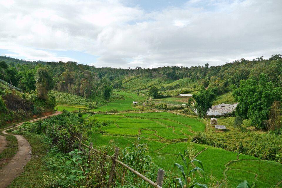 Trek entlang der Reisfelder in Nordthailand