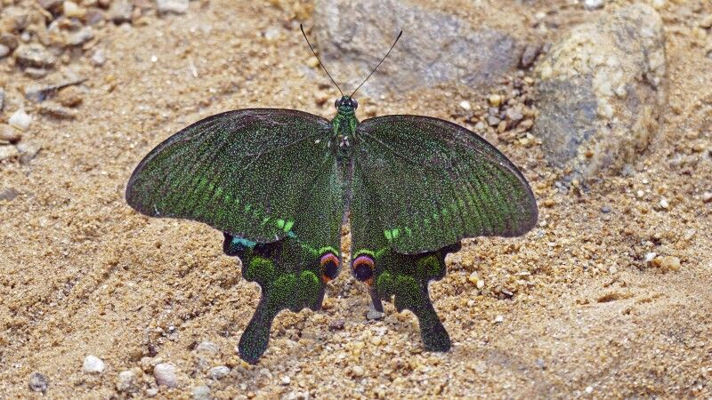 Schmetterling im Phong-Nha-Nationalpark (UNESCO-Weltnaturerbe) © Diamir