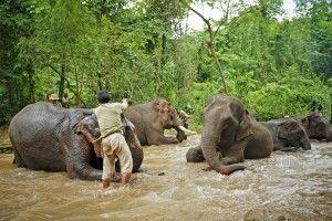 Im Elefantencamp