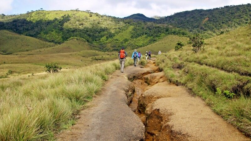 Trekking in den Horton Plains © Diamir