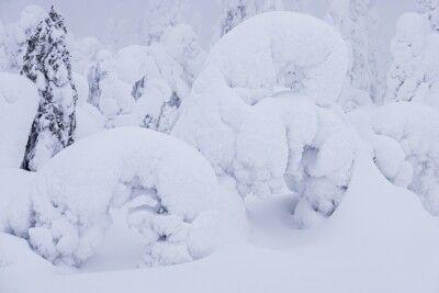 Die Schneelast verformt die Bäume