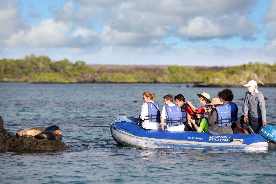 Ein typisches Galapagos-Erlebnis: Seelöwenbeobachtung aus 2m Entfernung, ohne dass sich die Tiere gestört fühlen. Was für ein Erlebnis!