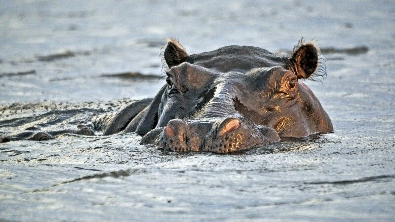 Chobe National Park © Diamir