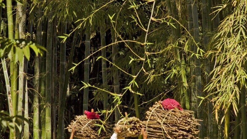 Wanderung durch Bambuswälder am Inle-See © Diamir
