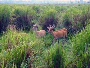 Kaziranga-Nationalpark