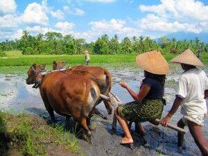 IDO_2016_6EXO_Farming_at_Taman_Sari_Buana_.JPG