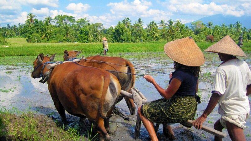 Farming Experience Bali © Diamir