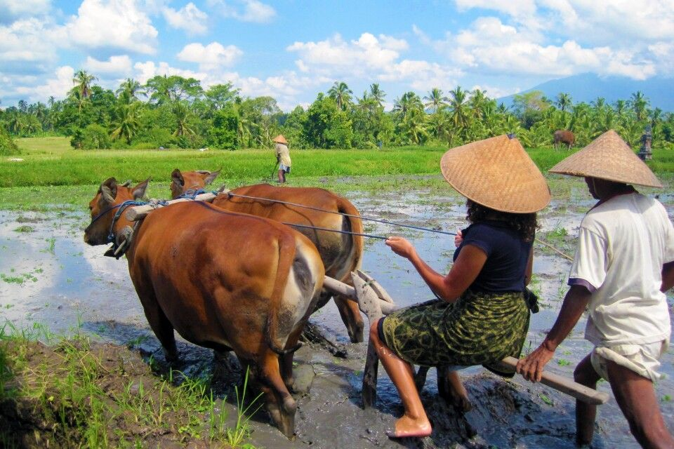 Farming Experience Bali