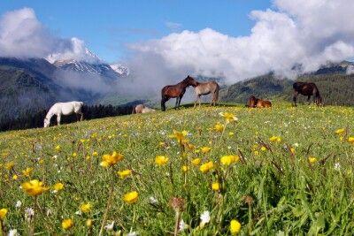 Pferdetrekking in Tuschetien