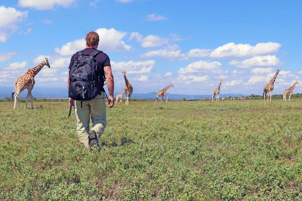 Giraffenwanderung beim Aberdare Nationalpark