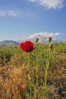 Im Frühsommer ist das Elburs-Gebirge mit seinem höchsten Gipfel, dem Damavand, besonders lieblich.
