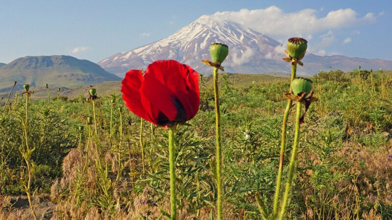 Im Frühsommer ist das Elburs-Gebirge mit seinem höchsten Gipfel, dem Damavand, besonders lieblich. © Diamir