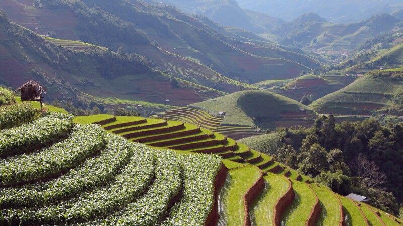 Mais- und Reisfelder © Diamir