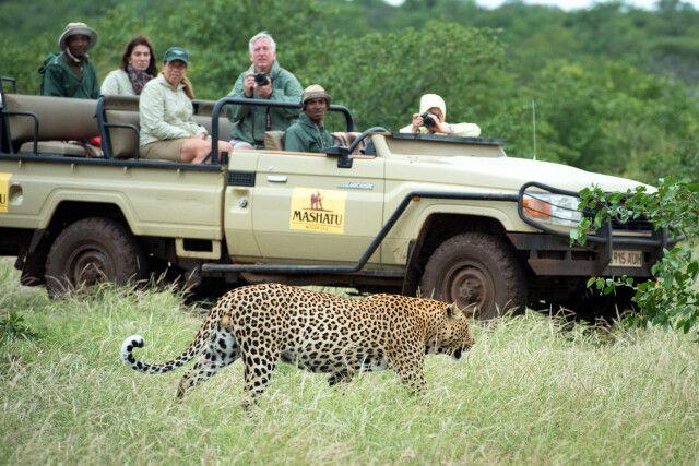 Begegnung mit Leopard bei Pirschfahrt