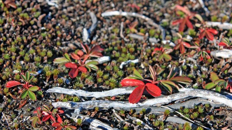 Herbstliche Tundra © Diamir