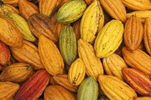 Kakao aus Brasilien