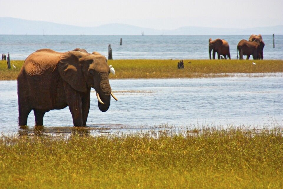 Matusadona-Nationalpark, Simbabwe