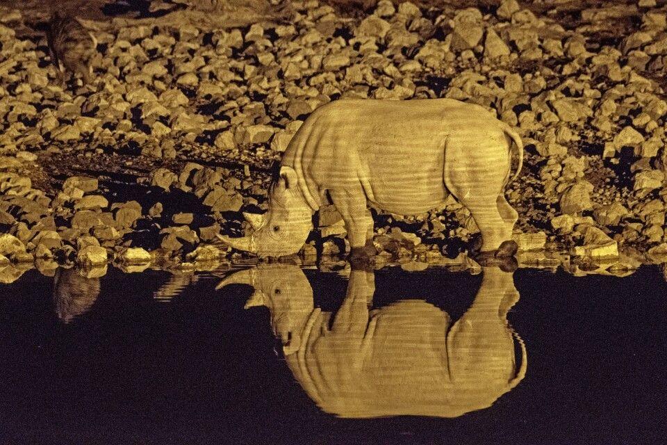 Nachtpirsch im  Etosha-Nationalpark