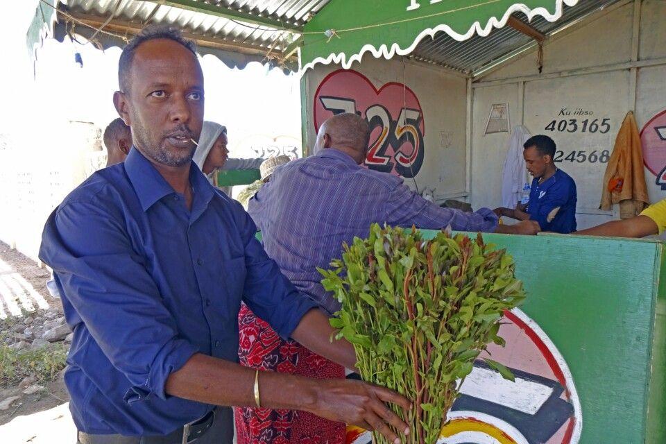 Khat – Das kauen von Koka-Blättern wirkt belebend