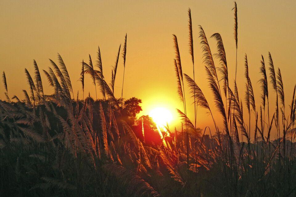 Sonnenuntergang im Chitwan-Nationalpark
