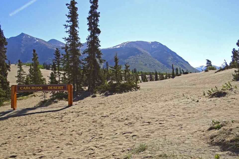 Carcross Desert – die kleinste Wüste der Welt