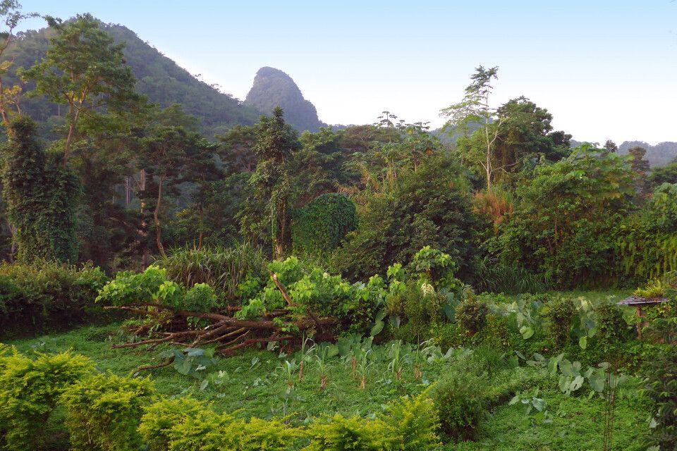 Regenwaldlandschaft