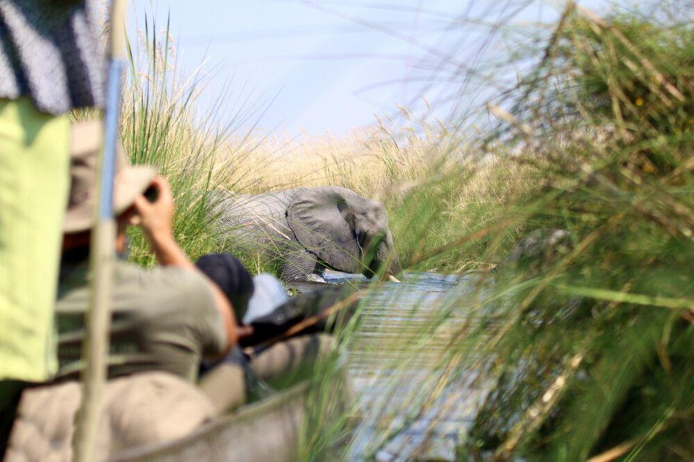 Natur pur! Im Mokoro im Okavango-Delta