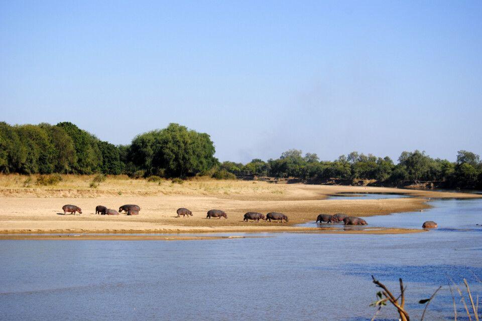 im South Luangwa NP