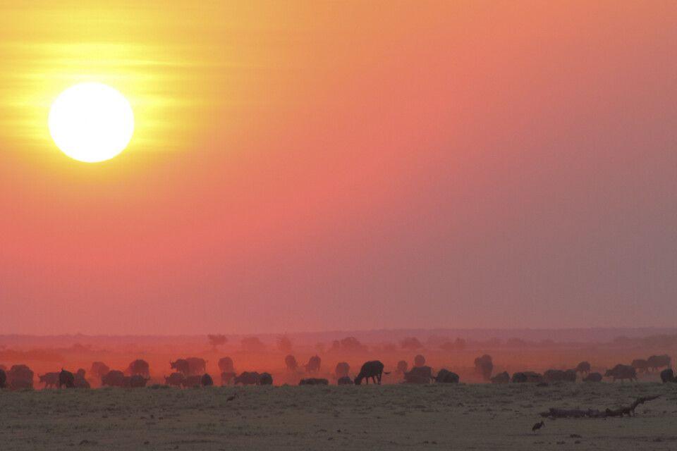 Sonnenuntergang am Chobe-Fluss