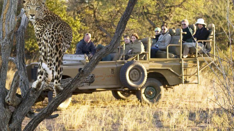 Leopardensichtung auf Okonjima © Diamir