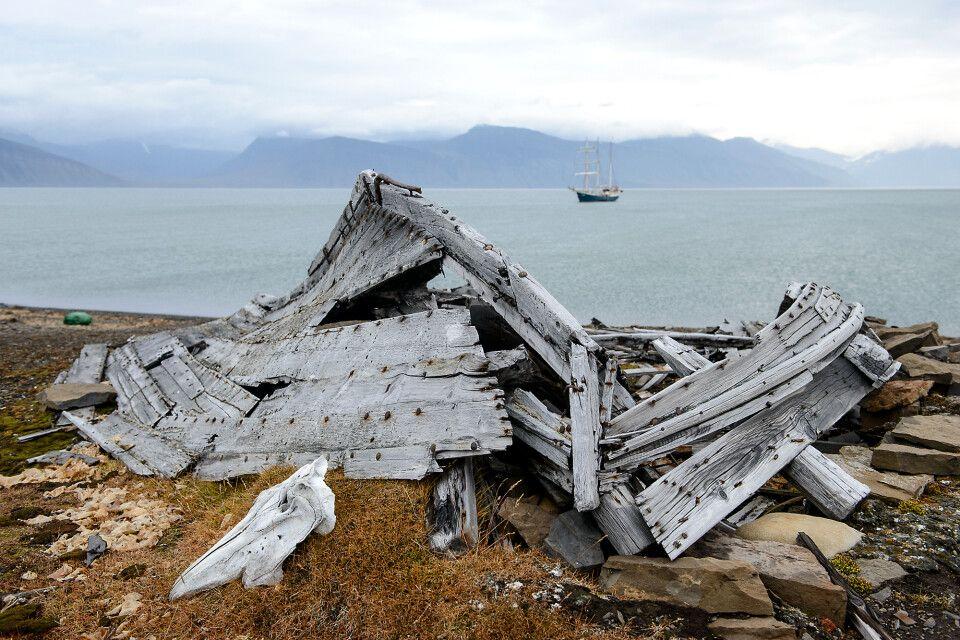 Botschaft aus der Vergangenheit: Beluga-Schädel und Boot, Bamsebu