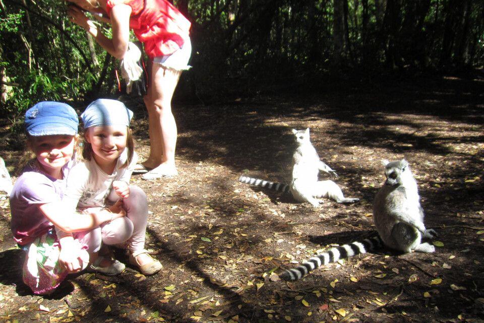 Auge in Auge mit den Lemuren im Monkeyland