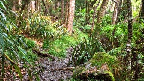 Schmaler Pfad durch die Tamarindenwälder des Gite de Belouve © Diamir