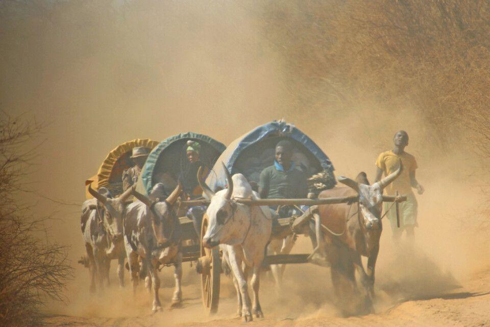 Eselskarren unterwegs zum Markt