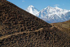 Imposante Eisriesen zum Greifen nah: Dhaulagiri (8167 m) und Tukuche Peak (6920 m)